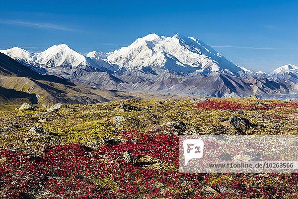 Vereinigte Staaten von Amerika USA Nationalpark Landschaftlich schön landschaftlich reizvoll rot Fokus auf den Vordergrund Fokus auf dem Vordergrund Ansicht Denali Nationalpark Mount McKinley Tundra