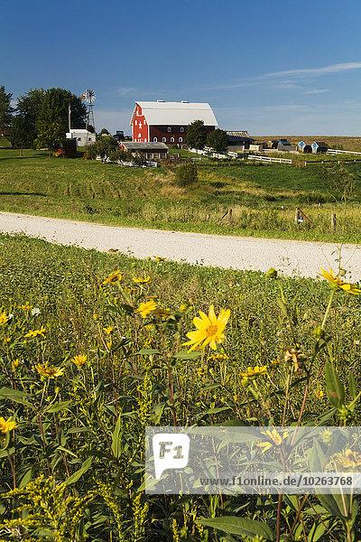 Ländliches Motiv ländliche Motive Amerika Bauernhof Hof Höfe Fernverkehrsstraße Hintergrund Wildblume Kies vorwärts Verbindung Iowa