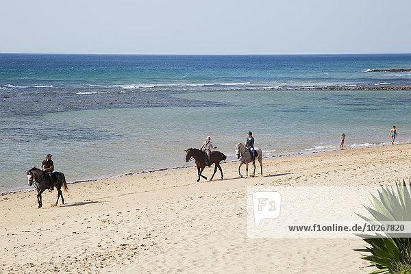 reiten - Pferd Andalusien Spanien