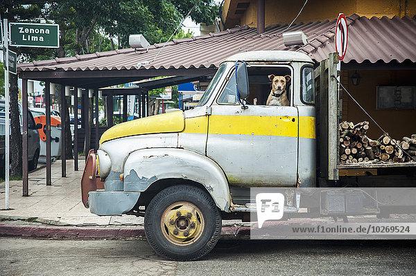 zwischen inmitten mitten Sitzmöbel Hund frontal Lastkraftwagen Grenze Brasilien alt Sitzplatz Uruguay