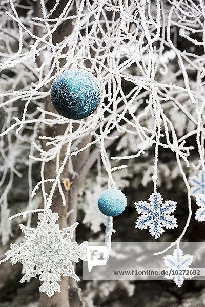 bedecken Baum hängen Close-up Weihnachten Dekoration Ast Kälte Alberta Calgary