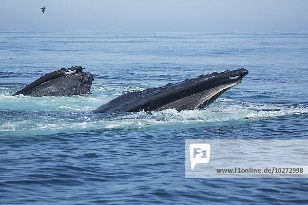 Bodenhöhe Wasser Amerika Verbindung Massachusetts Wal