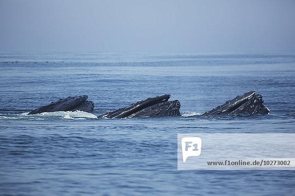 Bodenhöhe Wasser Amerika Wal Verbindung Massachusetts