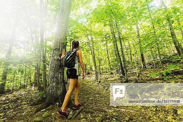Wald wandern