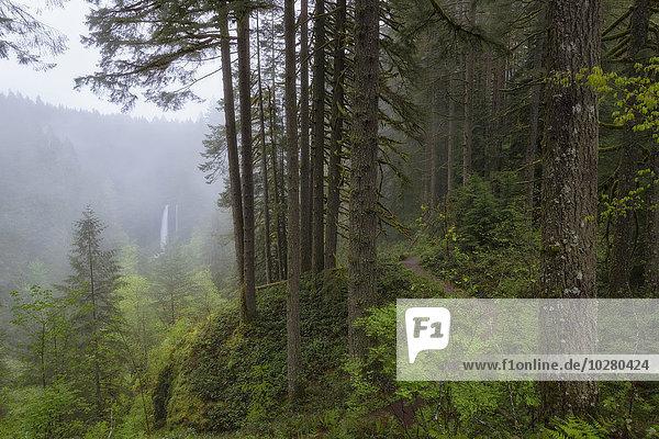 Wald Hintergrund Ansicht