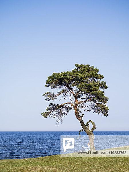 Baum Mensch unterhalb Meer