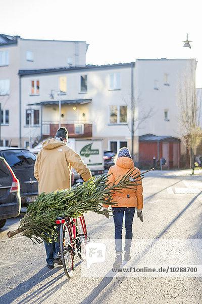 Schweden  Sodermanland  Nacka  Rückansicht des reifen Paares  das den Weihnachtsbaum mit dem Fahrrad transportiert.