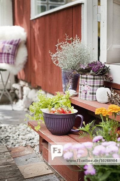 Schweden  Sodermanland  Topfpflanzen und Teller mit frischen Tomaten auf der Vordertür Schweden, Sodermanland, Topfpflanzen und Teller mit frischen Tomaten auf der Vordertür