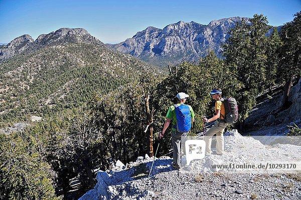 Paar Wanderungen  Mount Charleston Wilderness Trail  Nevada  USA