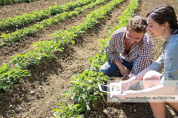 Pärchen  das auf dem Feld hockt und mit einem digitalen Tablett die Tomatenpflanze fotografiert. Pärchen, das auf dem Feld hockt und mit einem digitalen Tablett die Tomatenpflanze fotografiert.