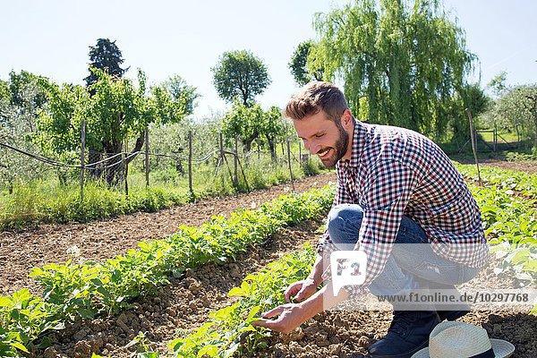 Junger Mann hockt auf dem Feld und neigt zu Tomatenpflanzen. Junger Mann hockt auf dem Feld und neigt zu Tomatenpflanzen.