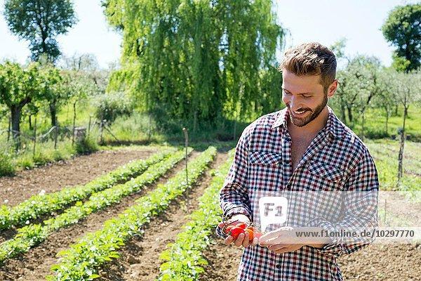 Junger Mann im Gemüsegarten mit lächelndem Blick auf die Tomaten Junger Mann im Gemüsegarten mit lächelndem Blick auf die Tomaten