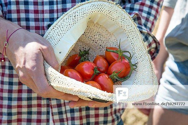 Ausschnitt eines jungen Mannes mit Tomaten im Hut Ausschnitt eines jungen Mannes mit Tomaten im Hut