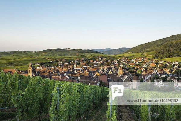 Dorf und Weinberge bei Sonnenaufgang  Riquewihr  Elsass  Frankreich  Europa