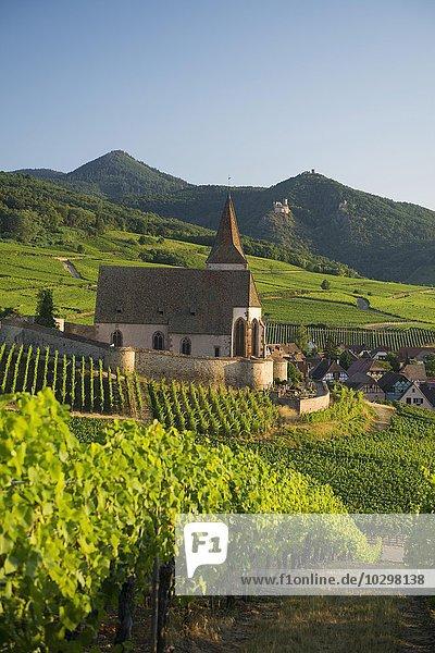 Kirche in den Weinbergen  Gotische Wehrkirche Saint-Jacques  Hunawihr  Elsass  Frankreich  Europa
