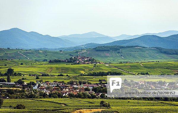 Dorf in den Weinbergen  hinten Ribeauvillé und der Grand Ballon  Elsass  Frankreich  Europa
