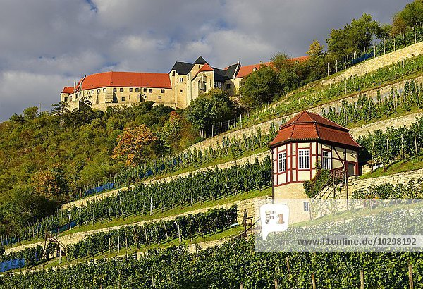 Herzoglicher Weinberg mit Weinberghaus  hinten Schloss Neuenburg  Freyburg an der Unstrut  Burgenlandkreis  Sachsen-Anhalt  Deutschland  Europa