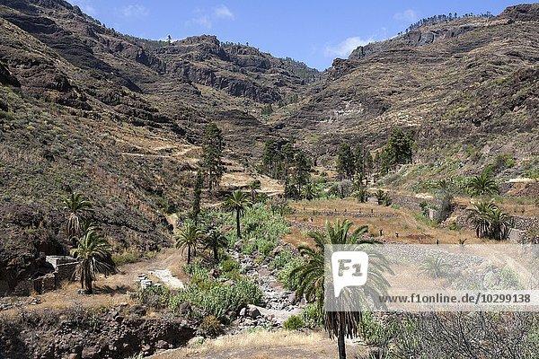 Barranco de Mogan bei El Pie de la Cuesta  Gran Canaria  Kanarische Inseln  Spanien  Europa