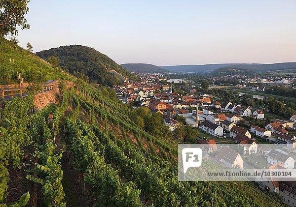 Weinberg am Schlossberg  Klingenberg am Main  Spessart  Mainviereck  Unterfranken  Franken  Bayern  Deutschland  Europa