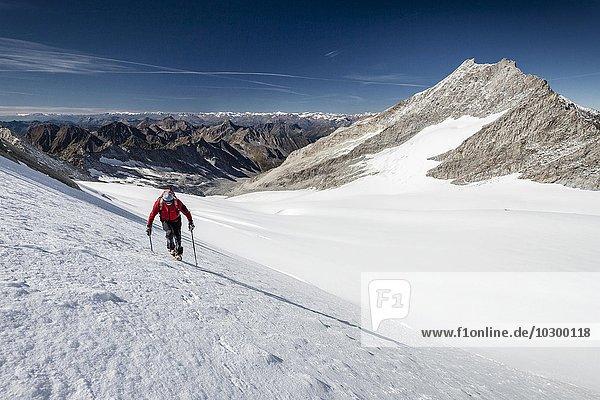 Bergsteiger beim Aufstieg zum Hohen Weißzint  hier am Gliederferner  rechts der Hochfeiler  Zillertaler Alpen  Lappach  Mühlwaldertal  Tauferer Ahrntal  Pustertal  Südtirol  Trentino-Südtirol  Italien  Europa