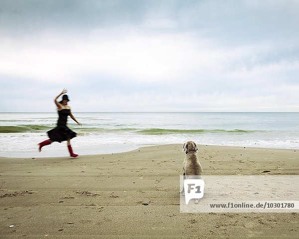 Weimaraner hunting dog and a woman waving  at the beach  Lokken  Jutland  Denmark  Europe