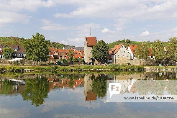 Main und Frickenhausen am Main  Mainfranken  Unterfranken  Franken  Bayern  Deutschland  Europa