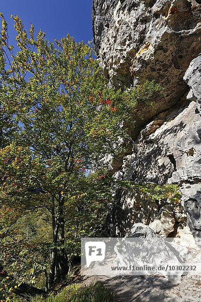 Sandstone cliffs  Goldsteig hiking trail  Autumn  Saxon Switzerland National Park  Saxony  Germany  Europe