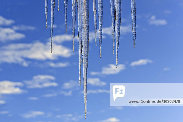 Icicles against a blue sky with some clouds  Upper Bavaria  Bavaria  Germany  Europe