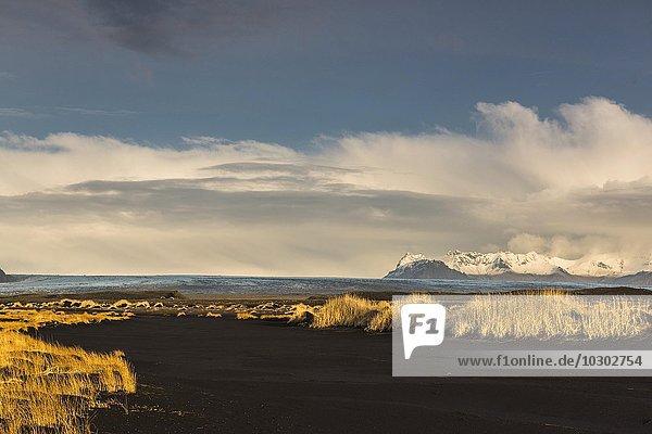 Schwarzer Lavasand mit Grasbüscheln vor Gletscherzunge  Jökulsarlosn Gletscher  Skaftafell  Südisland  Island  Europa