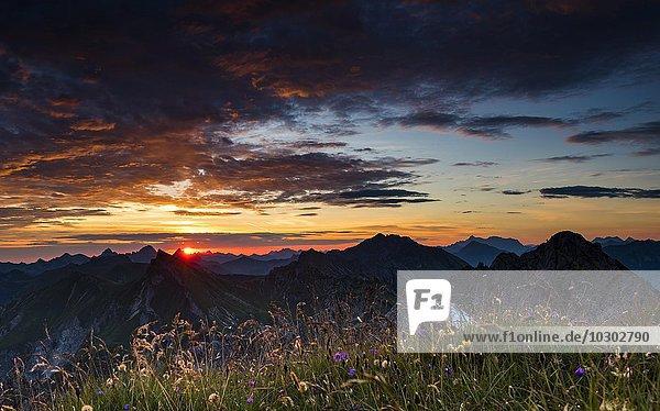 Sonnenaufgang über Allgäuer Bergen mit Blumenwiese  Allgäuer Alpen  Allgäu  Bayern  Deutschland  Europa