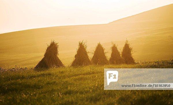 Heumännchen  gestapeltes Heu bei Sonnenuntergang  Fair Isle  Shetlandinseln  Schottland  Großbritannien  Europa