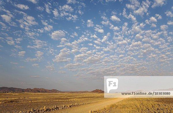 Gravel road on arid plain  isolated mountain ridges  fluffy clouds at edge of Namib Desert  evening light  Kulala Wilderness Reserve  Namibia  Africa