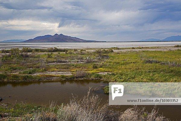 Gebiet am Lee Creek  am Rande vom Great Salt Lake  wird von der Umweltorganisation Audobon als Naturschutzgebiet verwaltet  Salt Lake City  Utah  USA  Nordamerika