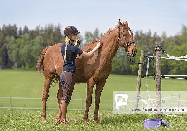 Reiterin striegelt ein Pferd