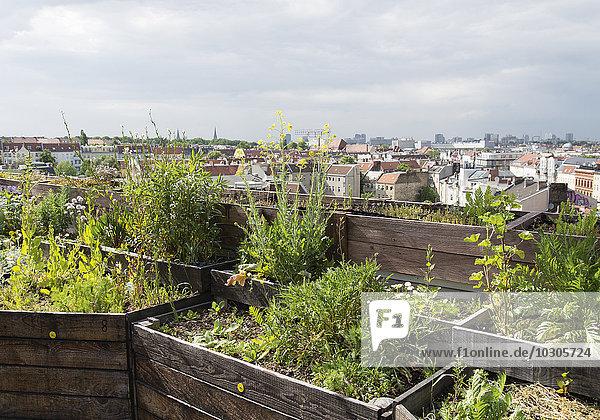 Urbanes Gärtnern auf einem Hochhaus  Berlin  BRD