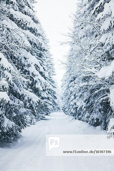Bulgaria  Vitosha Mountain  winter road