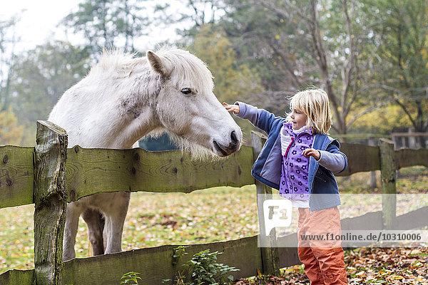 Little girl stroking a horse