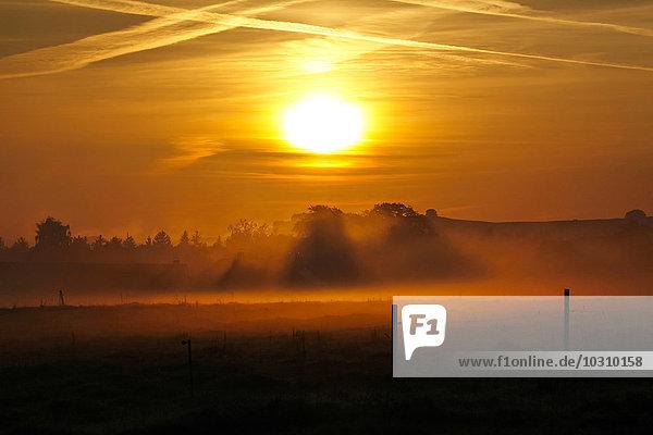 Deutschland  Sachsen  Herbstsonne am Morgen