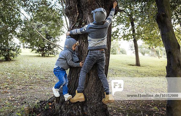 Rückansicht von zwei kleinen Jungen  die auf einen Baum klettern