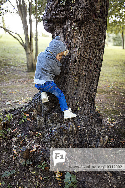 Little boy climbing on a tree trunk