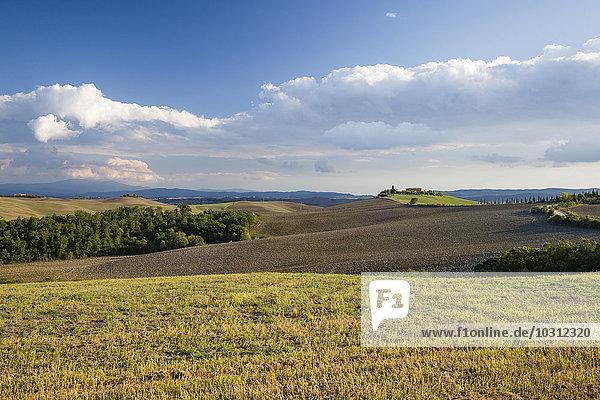 Italien  Toskana  Provinz Siena  Kreta Senesi  Landschaft im Herbst