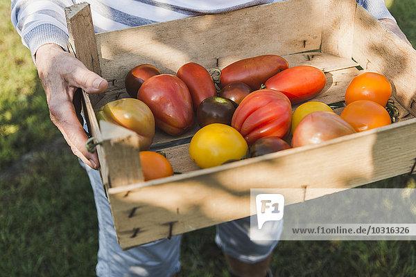 Frau hält Kiste mit verschiedenen Tomaten