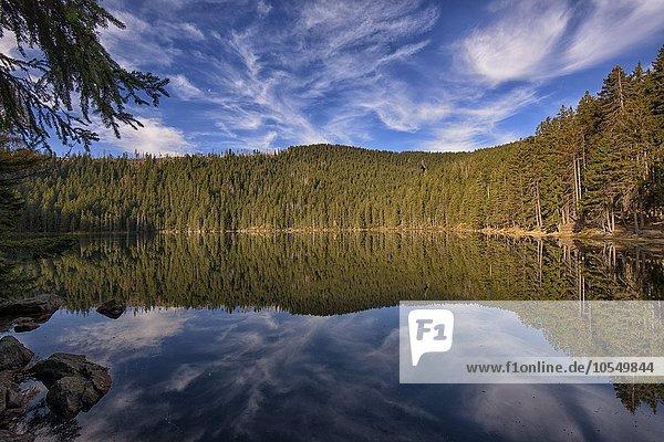 Spiegelung mit Wolken am Teufelssee im Herbst  Certovo jezero  Nationalpark Sumava  Böhmerwald  Tschechien  Europa