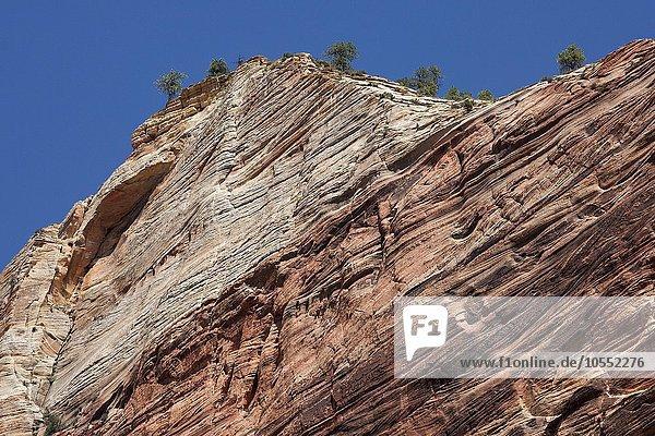 Steilwand  Sandsteinfelsen  Zion Nationalpark  Utah  USA  Nordamerika