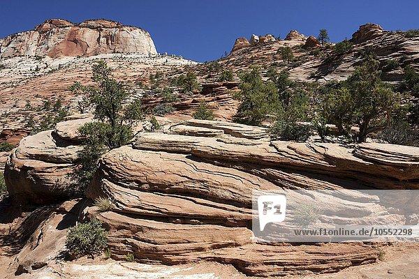 Gesteinsformationen aus Sandstein am Canyon Overlook Trail  hinten links East Temple  Zion Nationalpark  Utah  USA  Nordamerika