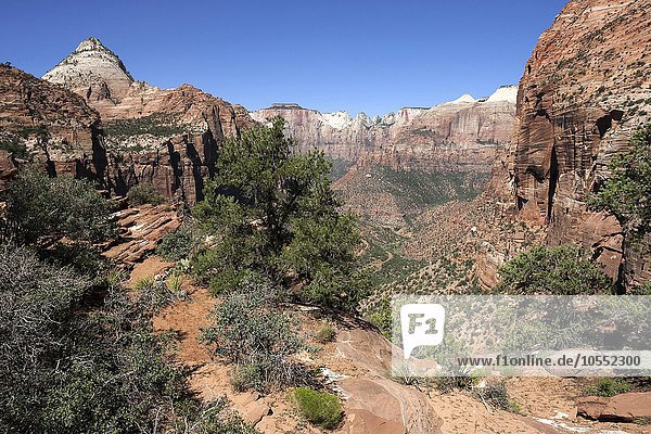 Ausblick vom Canyon Overlook in den Zion Canyon  hinten links Bridge Mountain  Zion Nationalpark  Utah  USA  Nordamerika