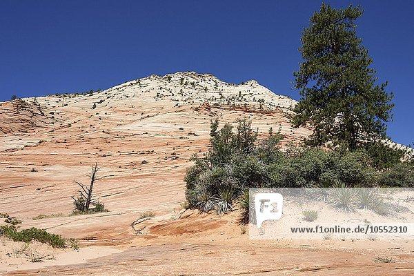 Gesteinsformationen aus Sandstein am Clear Creek  Zion Nationalpark  Utah  USA  Nordamerika