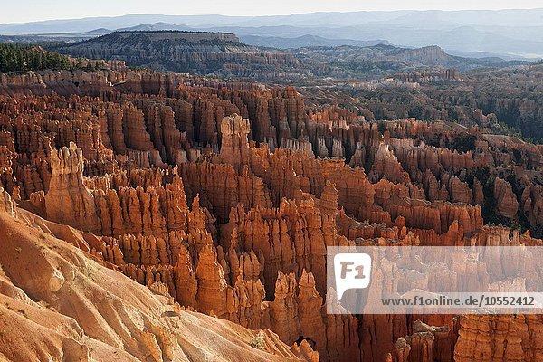 Ausblick vom Inspiration Point in das Amphitheater mit farbigen Gesteinsformationen  Hoodoos  Morgenlicht  Bryce Canyon Nationalpark  Utah  USA  Nordamerika