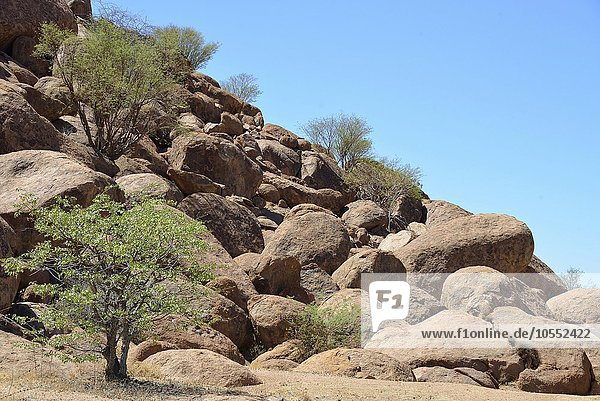 Runde Felsen  bei Twyfelfontein  Damaraland  Namibia  Afrika