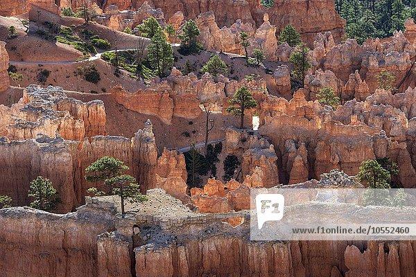 Ausblick auf farbige Gesteinsformationen mit Kiefern  Hoodoos  Morgenlicht  Bryce Canyon Nationalpark  Utah  USA  Nordamerika